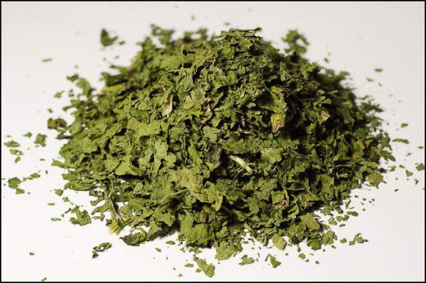Coriandre aromate - La Belle Verte