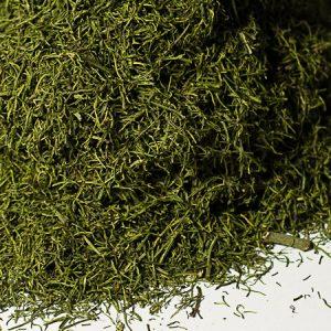 Fenouil aromate - La Belle Verte